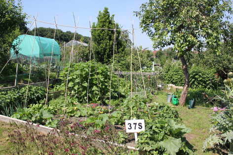 Ash Road Allotment - Plot 37S.JPG