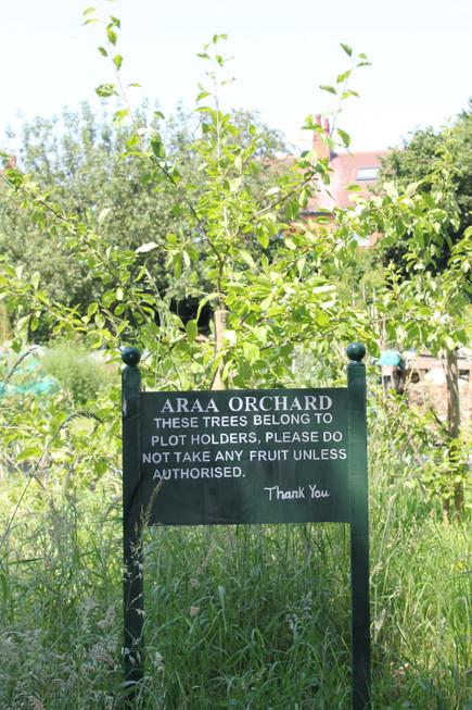 Ash Road Allotment - Orchard Sign.JPG