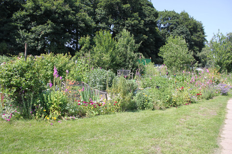 Ash Road Allotments floral display.JPG
