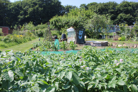 Ash Road Allotment - Plot 87W.JPG