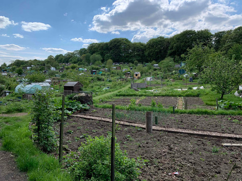 Ash Road Allotments