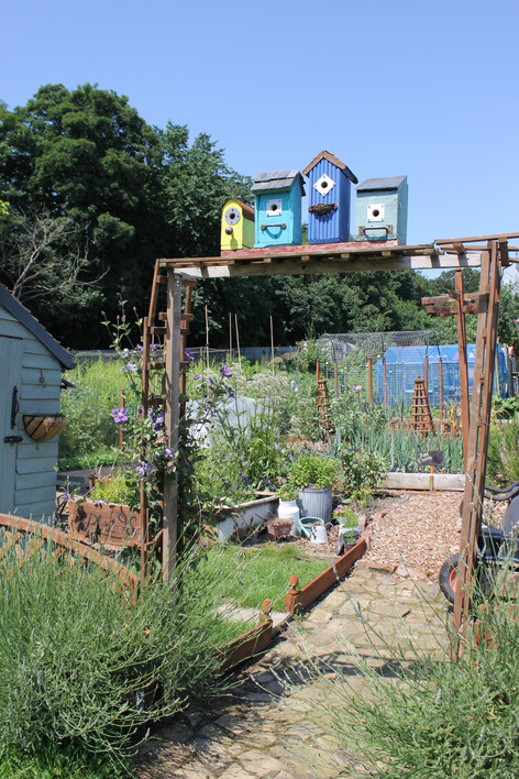 Ash Road Allotments - quirky bird boxes.JPG