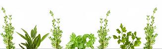 vegetable-clipart-landscape-96738-451668