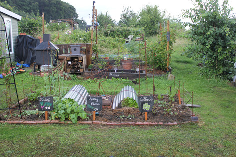 Ash Road Allotments - salad bed.JPG
