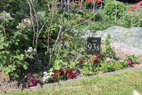 Ash Road Allotments - Plot sign.JPG