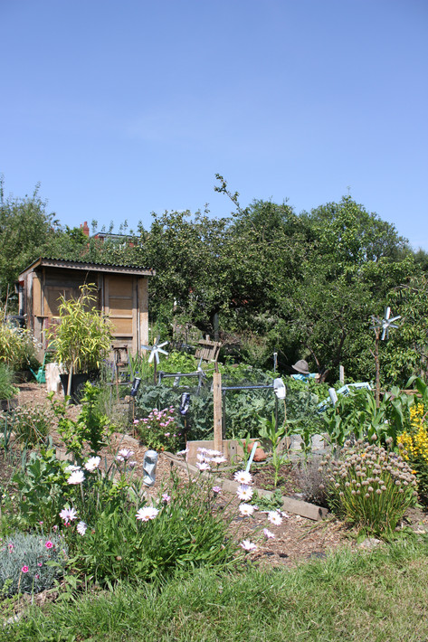 Ash Road Allotment - Plot 124E.JPG