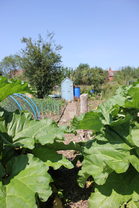 Ash Road Allotment - Plot