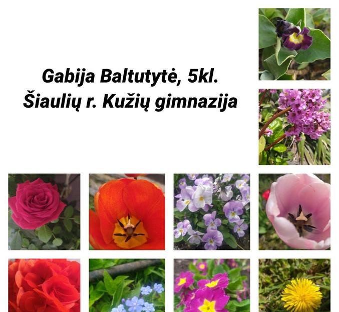 Gabija Šiaulių r. Kužių gimnazija.jpg