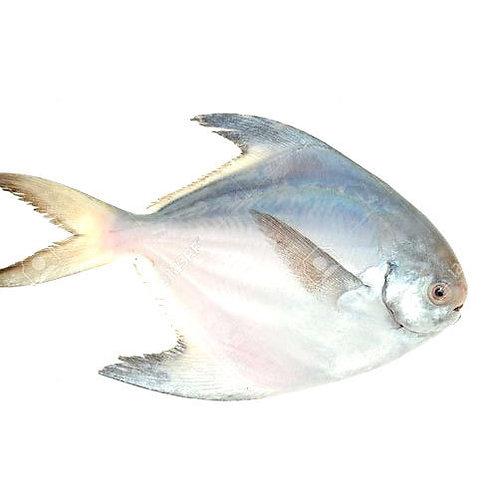 Pomfret fish (পমফ্রেট মাছ )250GM