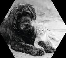shutterstock_441067924_chien_chat_hexa.p