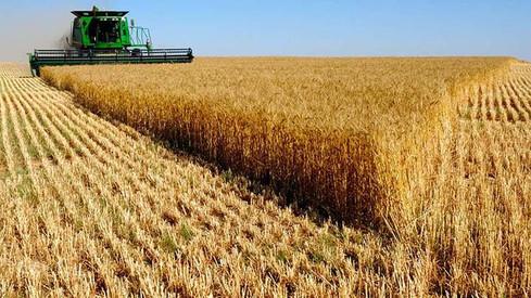 El primer brote del año: el trigo deja en Córdoba U$S 782 millones