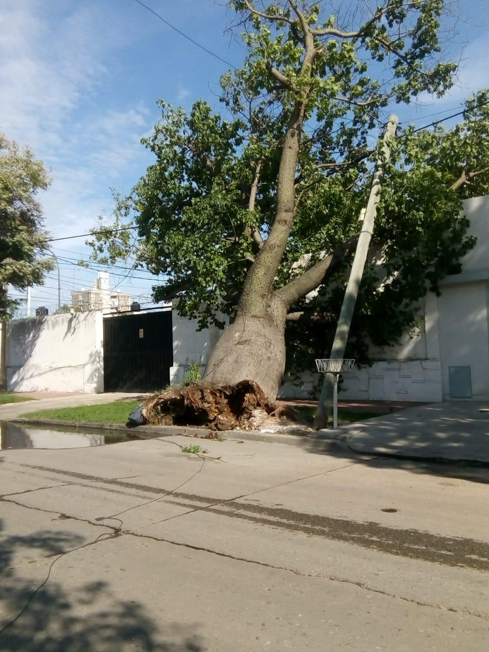 No se registraron heridos ni evacuados. Las ráfagas de viento alcanzaron los 85 kilómetros por hora en la ciudad de Córdoba. Hubo al menos 50 árboles caídos.