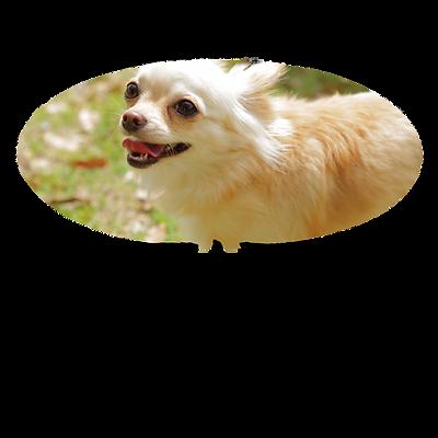 愛犬のロコモ対策