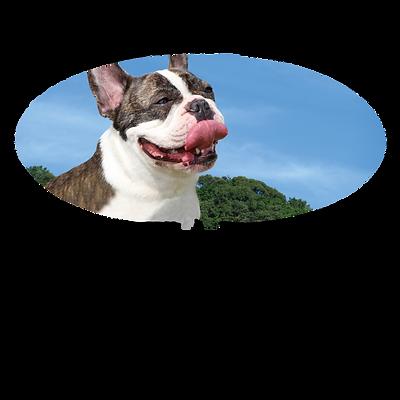 愛犬の病気発見