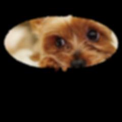 愛犬のヘルニア予防
