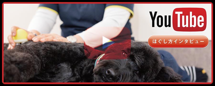 愛犬の介護予防に!WON・WGG ワンエッグ | ほぐし方のインタビュー