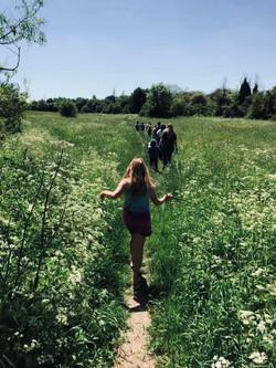 meadow photo