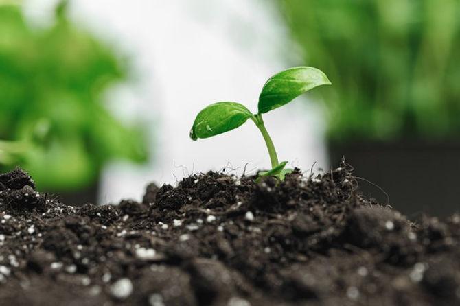 pequeno-brote-planta-crecimiento-suelo-cerca_93675-105191.jpg