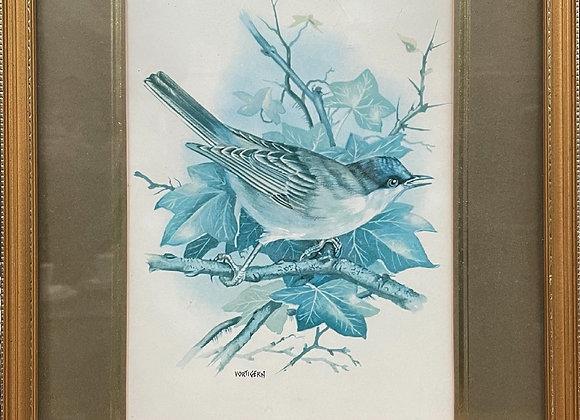 Framed Antique Bird Print by Vortigern