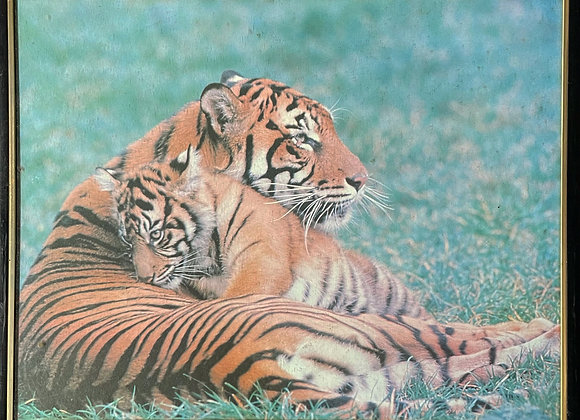 Small Framed Print of Tigers
