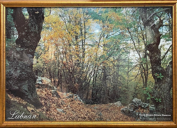 Stunning Print of Lubnãn, Horsh Ehden Nature Reserve in Excellent Condition