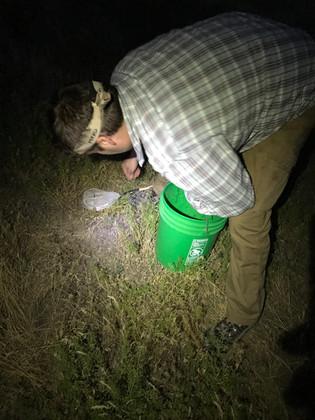 Matt McNelly hunting for crickets