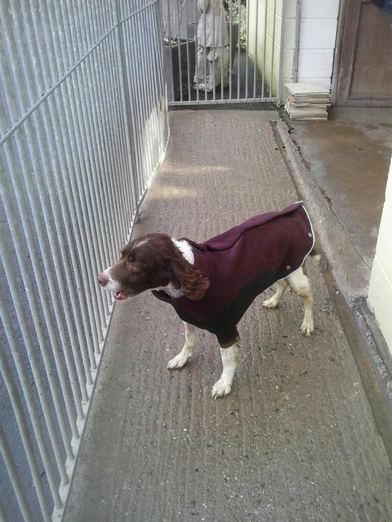 Here is Lottie in her smart coat