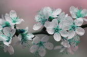 blossom-843288_1920.jpg