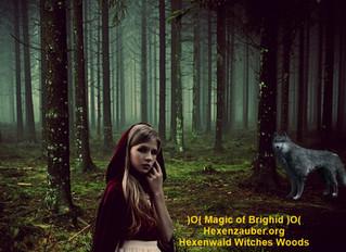 Langue des arbres, Internet de la forêt, sorcières aujourd'hui