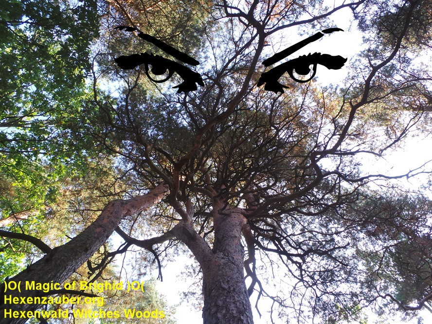 sorcieres forestieres rituel, sorcieres de pleine lune