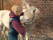 Osteopathie Pferd