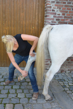 Pferdeosteopathie