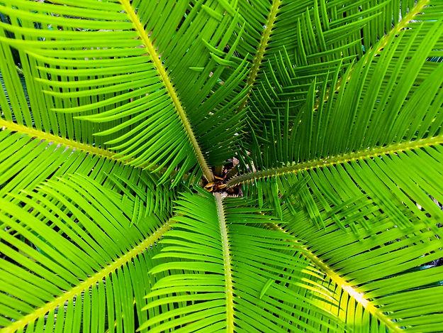 palm-james-palm-tree-close-64713.jpeg