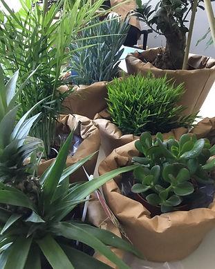 Bueroplanung mit Pflanzen und natürlichen Materialien bietet eine entspannende und haptische Abwechslung während der Bildschirmarbeit.