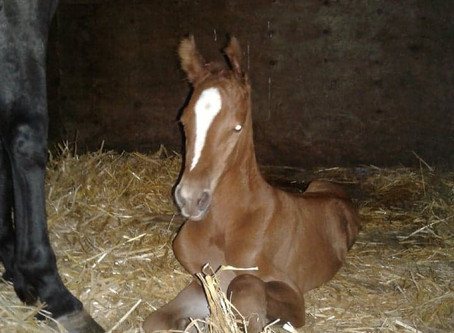 Welcoming Foal #4 for 2020! - Ch Filly