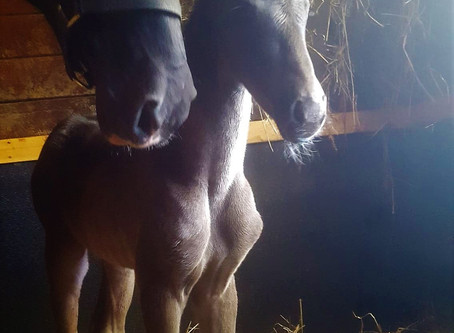 Welcoming Foal #6 for 2020! - CHC The Final Effect