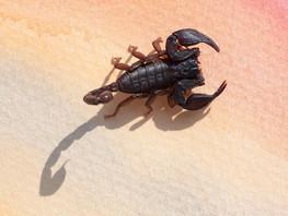 Scorpio Native Traits