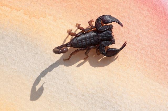 Scorpio horoscope and traits