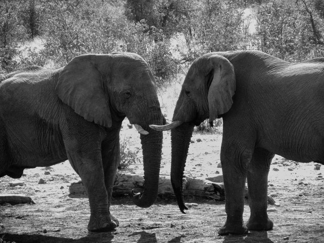 Elephant sex technique and Astrology