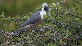 birding-mburo.jpg