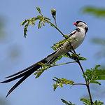 birding-rw_edited.jpg