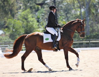 Maternal grand Sire Alladin under saddle