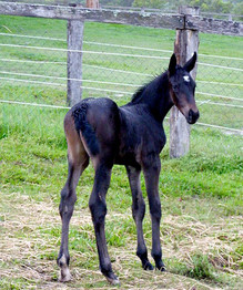 Born 25th November 2010