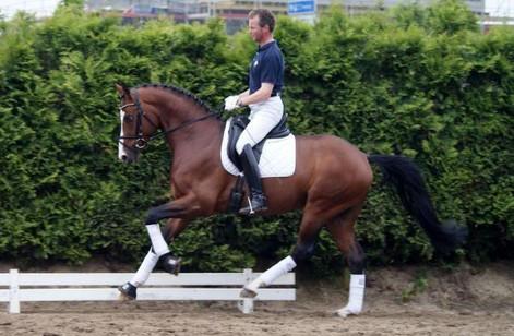 Fiderfurst was a Premium Licensed stallion at the 2011 Hanoverian licensing in Verden Germany