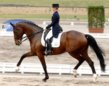 2016 Australian National Medium Champion and 3rd in Advanced at the National Dressage Championships.