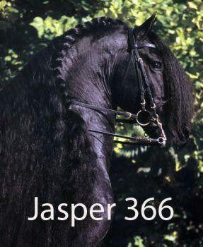 jasper 366.jpg