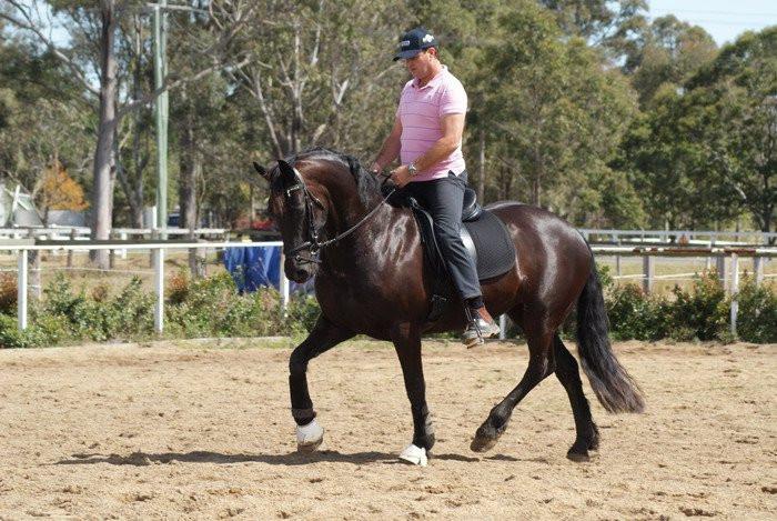Wallbrook Gwenevere starting under saddle