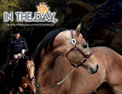 Stallion: In The Day