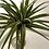 Thumbnail: CACTUS AND AIR PLANTS