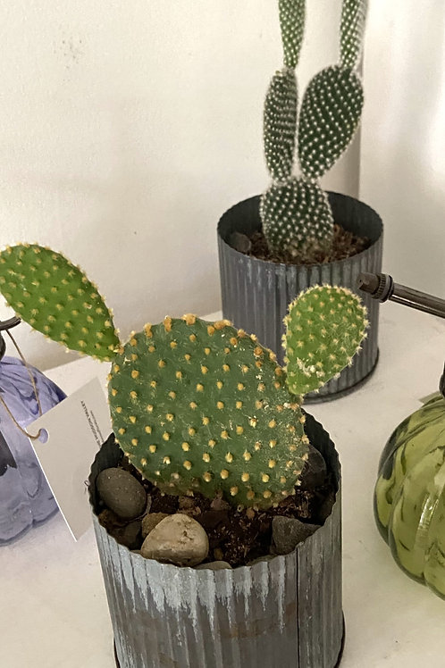 CACTUS AND AIR PLANTS